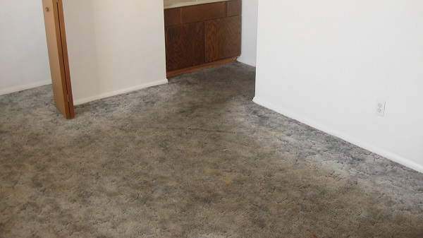 A Striking Image Las Cruces Carpet Cleaning Wool Rug